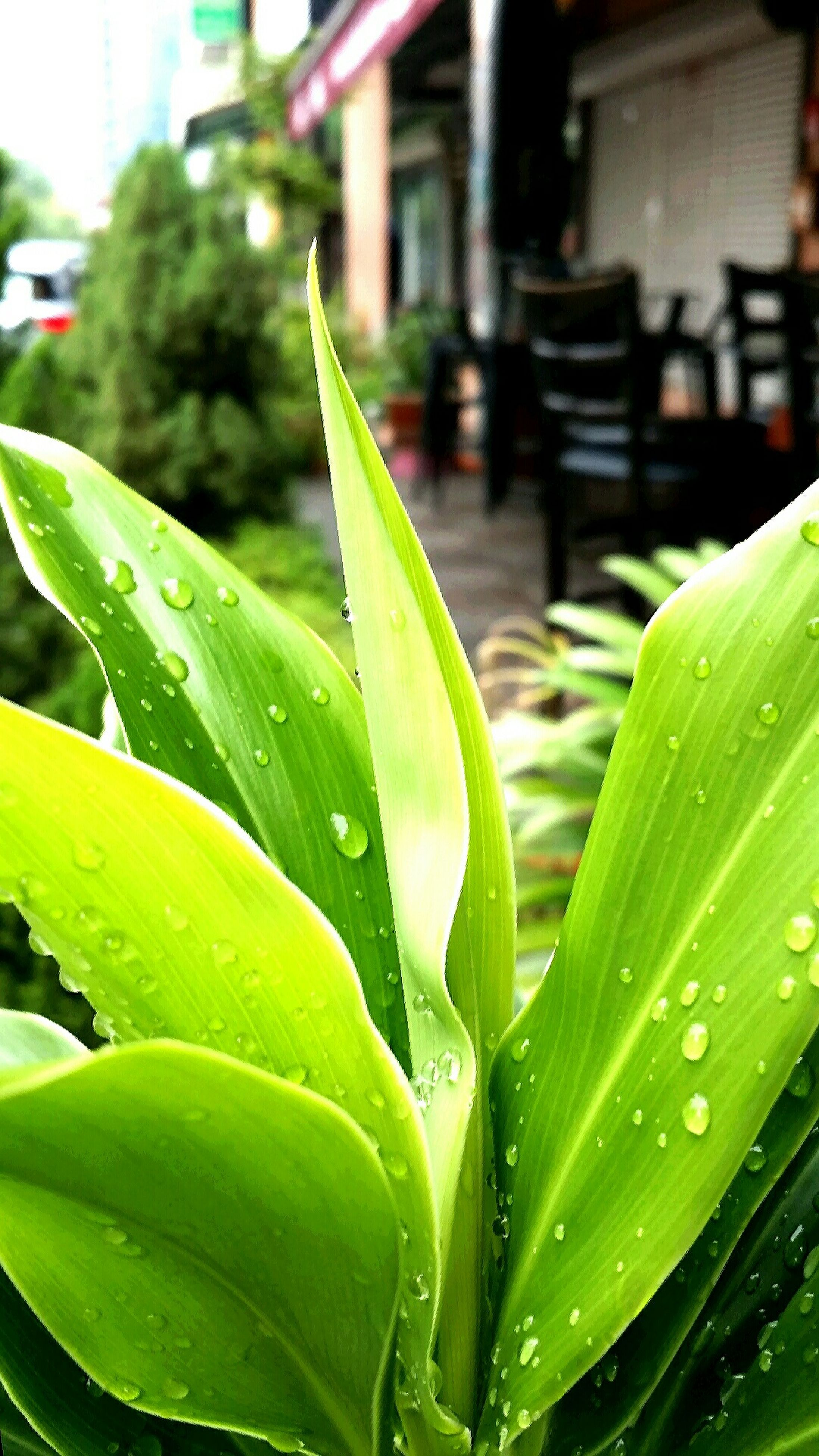 drop, water, leaf, wet, green color, focus on foreground, close-up, growth, plant, freshness, rain, selective focus, nature, raindrop, fragility, green, day, building exterior, outdoors, water drop