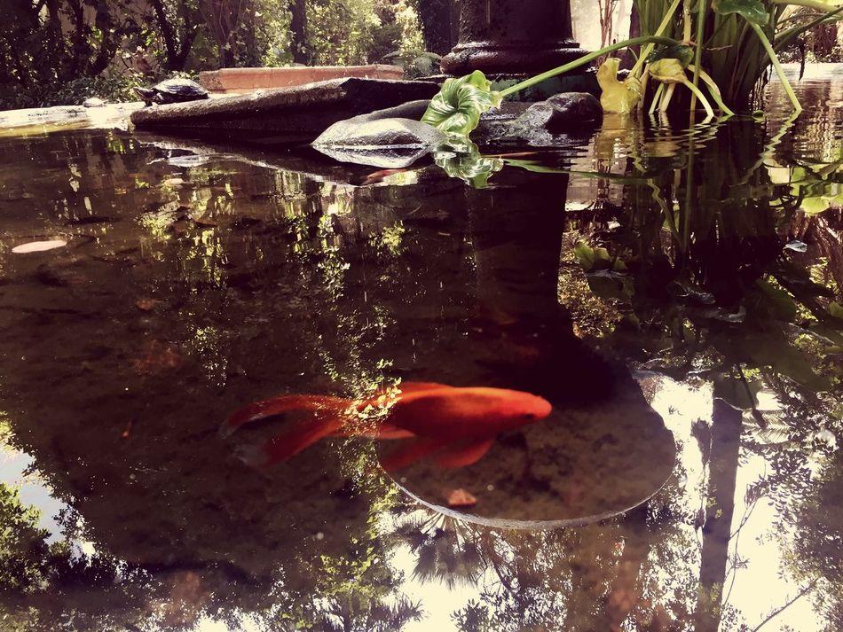 Fish... First Eyeem Photo