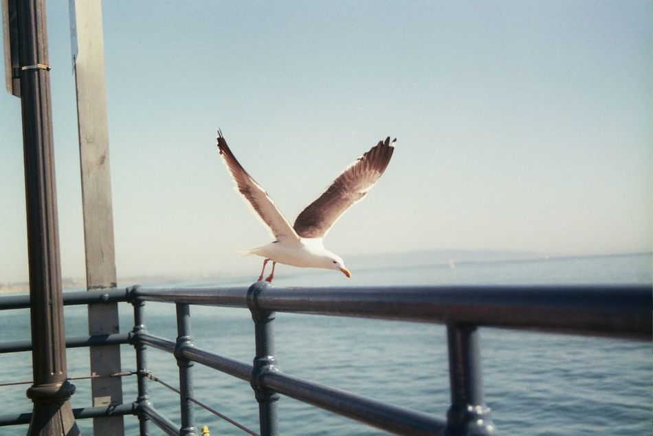 Beautiful stock photos of california, sea, bird, flying, animals in the wild