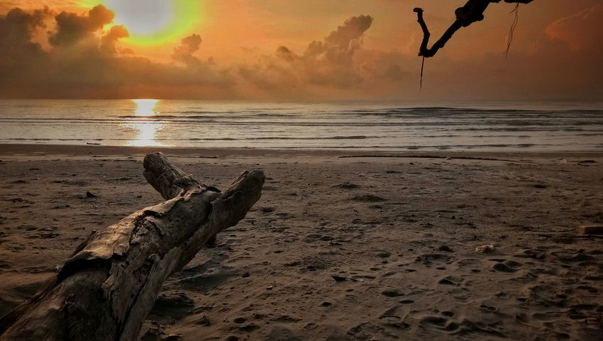 Outdoors Beach No People SilhouetteSunset Sea Nature Sand Old Tree