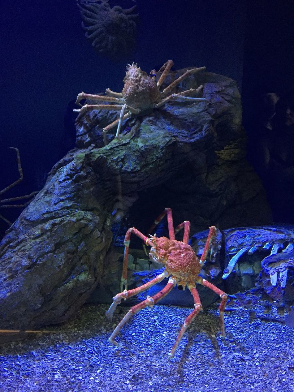 Sea Life Underwater Aquarium Crab Crabs 😚 Legs Aquariums Close Up In Pairs Two Is Better Than One Two