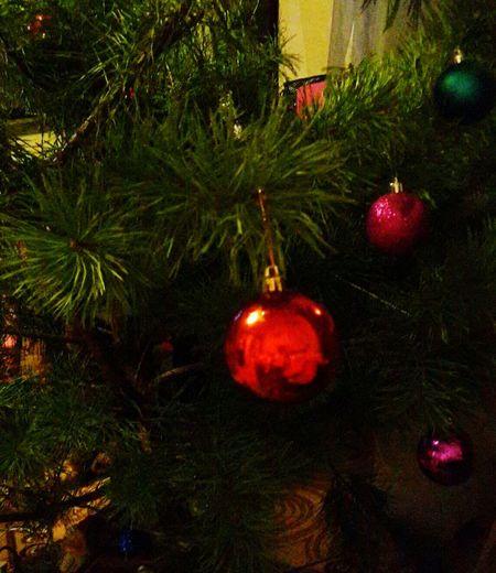 Christmas Christmas Tree Christmas Decoration Celebration Nastena Korshunova Nasty :)  Winter
