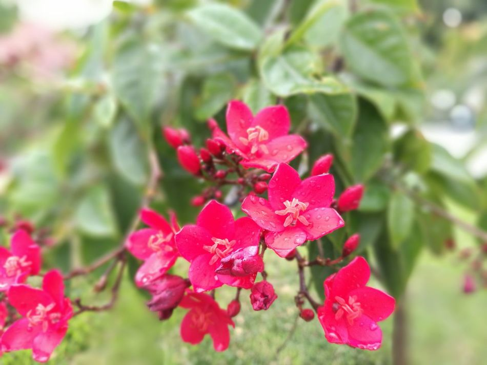 Tarde lluviosa Flower Nature Plant