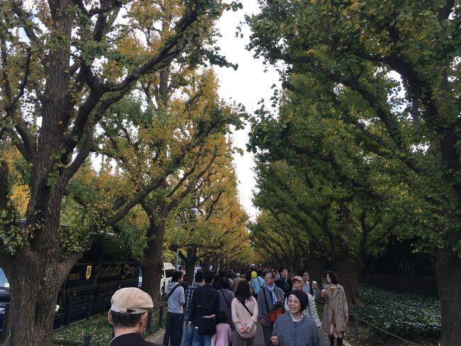 NoEditNoFilter Beautiful Ginkgo Tree Autumn Colors Autumn Leaves Autumn🍁🍁🍁 Taking Photos Walking