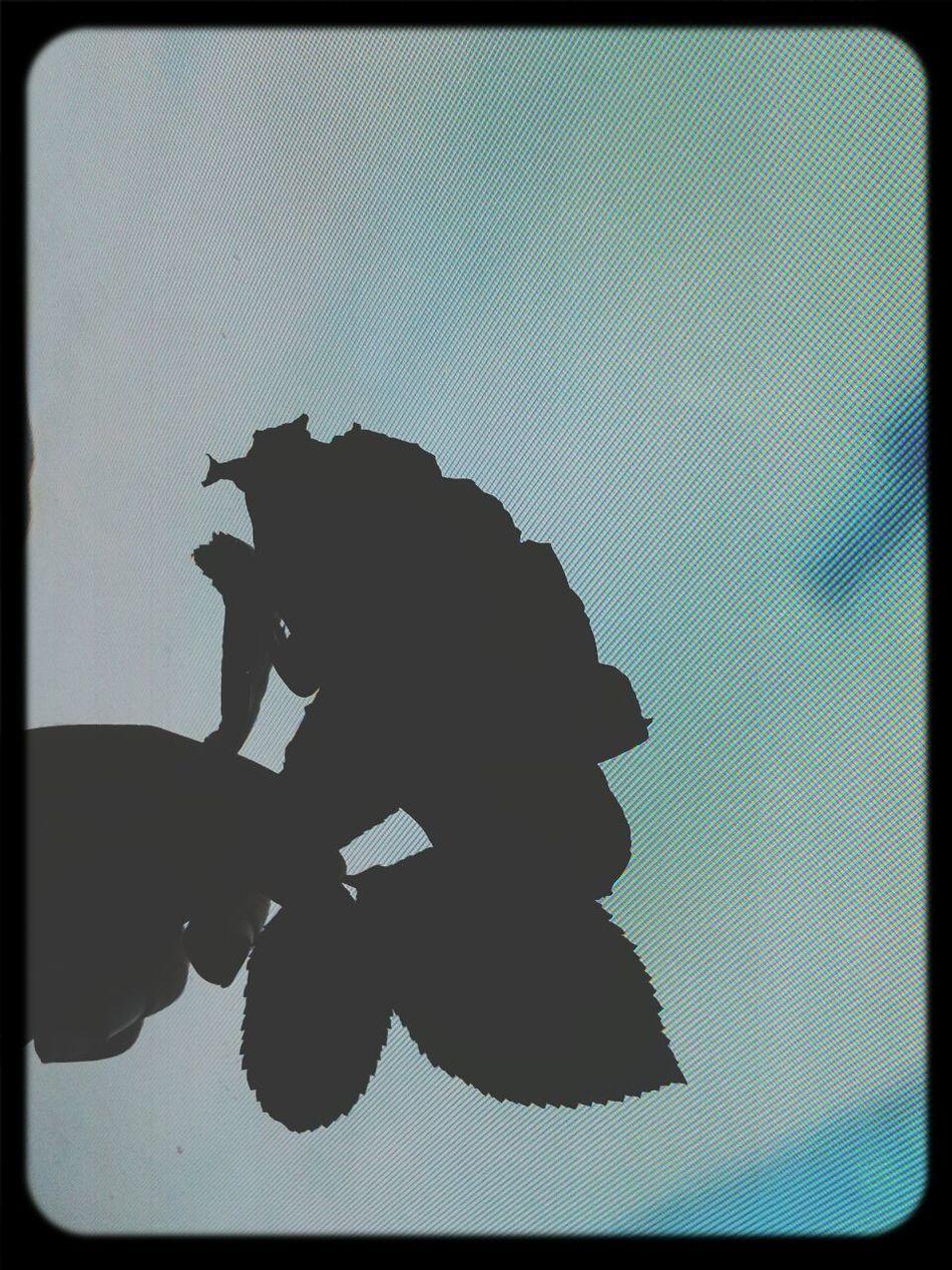 flowers ♥~
