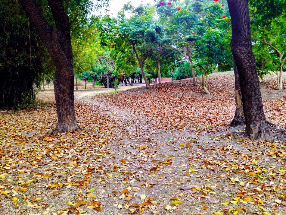 Defoliation Park Trees
