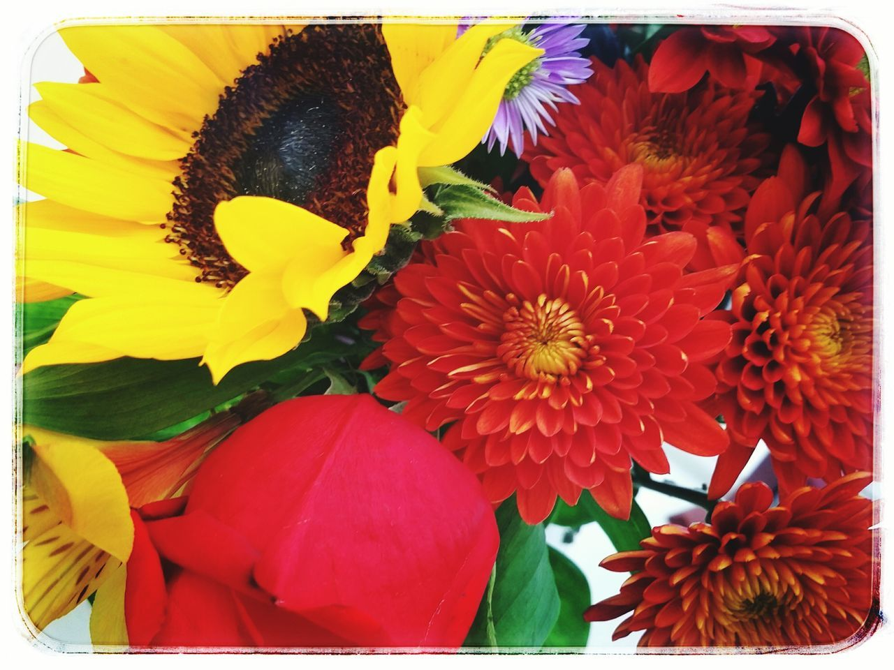 Flowers, natural light, colors, Indoor Photography Vibrant Sunflower
