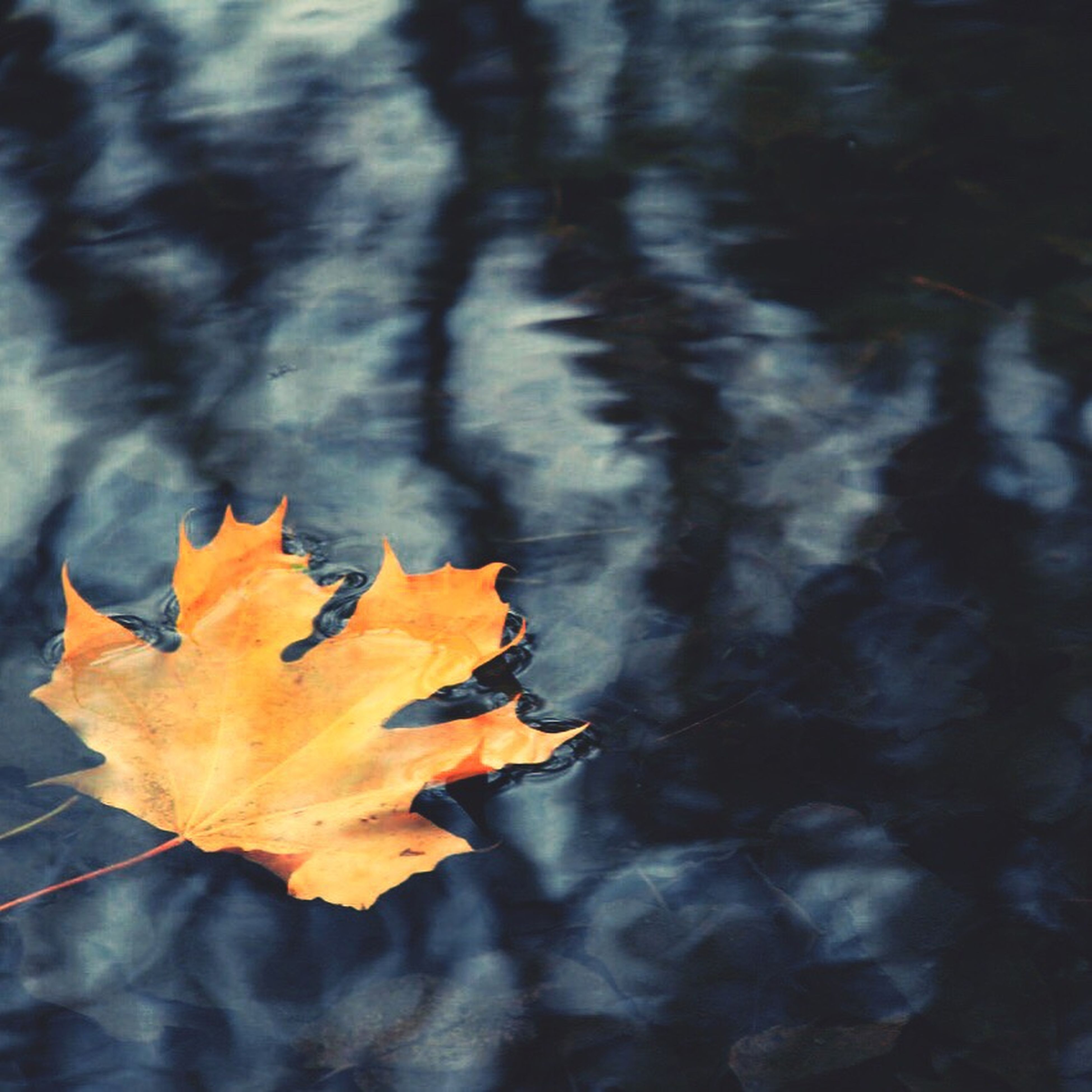 leaf, autumn, change, season, leaves, orange color, nature, maple leaf, close-up, leaf vein, beauty in nature, tranquility, natural pattern, dry, water, focus on foreground, outdoors, fallen, no people, wet