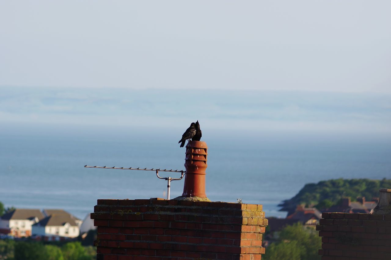 Wales Blue Sky Bristol Channel Sea And Sky Brick Wall Cymru-photography Sea Horizon Over Water Crow Chimney Airial View No People Roof Building Exterior Day Bird Outdoors Architecture Sky