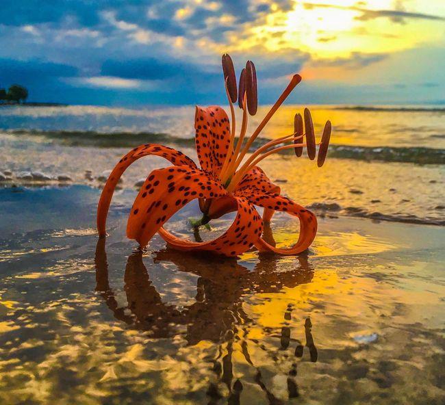 Flowers, Nature And Beauty EyeEm Best Shots - Nature Sunrise_sunsets_aroundworld Magical Moments Agate Beach  Naturelovers EyeEm Best Shots