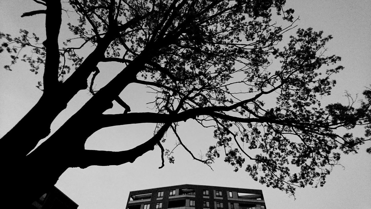Tree dwarfing highrise. · Hamburg Germany Hh 040 Barmbek Highrise High Rise Architecture Tree Trees Framed By Trees Branches Silhouette Silhouettes Winter Mood Blackandwhite Black & White Experimental Simplicity