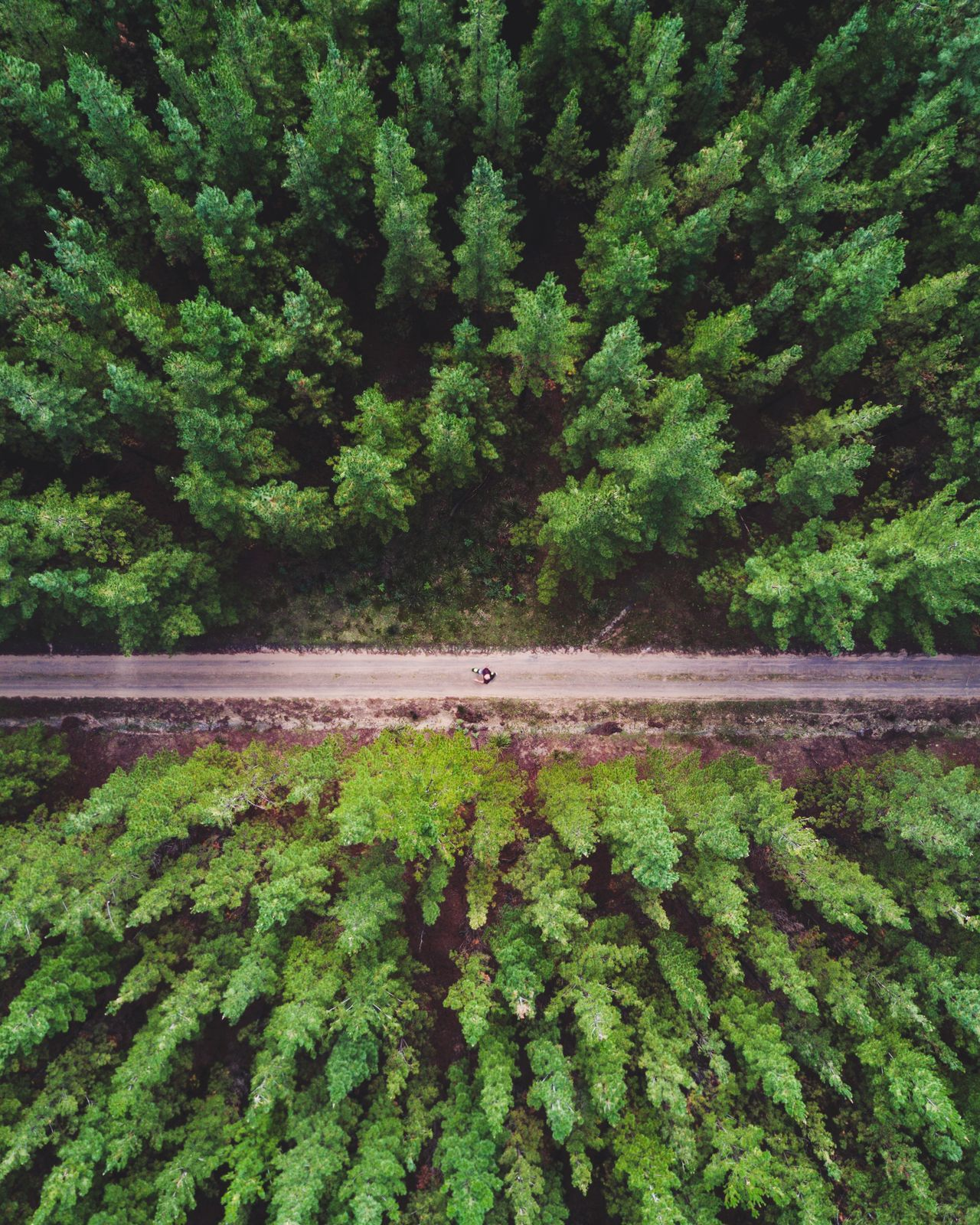 @itchban / www.itchban.com Beauty In Nature Day Domestic Animals Drone  Forest Green Color Growth Leaf Lush Foliage Nature One Adult One Animal One Person Outdoors Plant Tree Break The Mold The Great Outdoors - 2017 EyeEm Awards