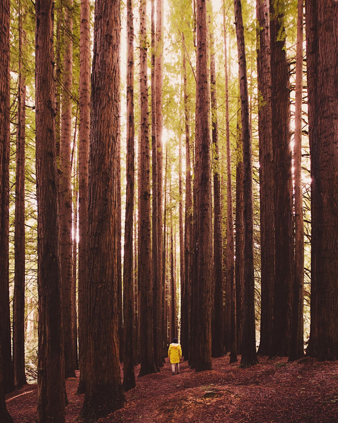 Forest Nature Tree WoodLand Tree Trunk Beauty In Nature Outdoors Landscape Scenics No People Day