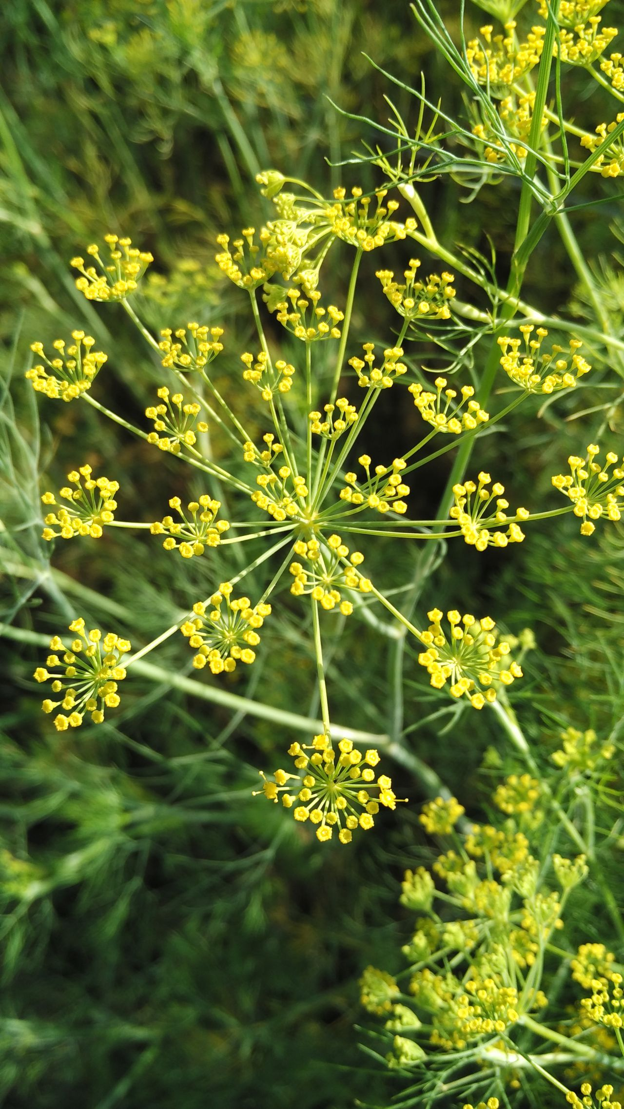 Nature Growth Green Color Sunlight Plant Beauty In Nature No People Close-up Day Mi4iphotography Mi4icamera Random Photography Mustard
