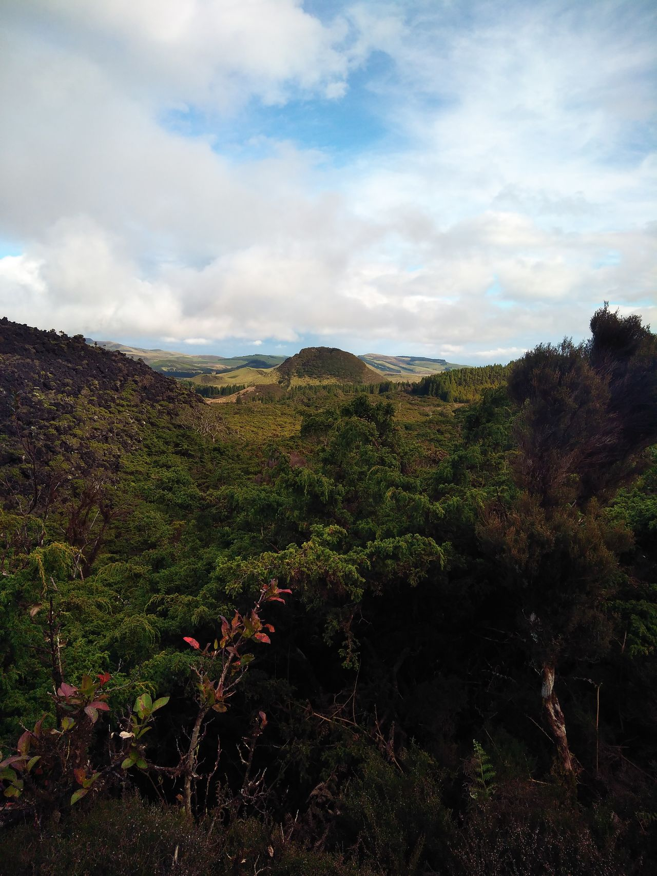 Inactive volcano Nature Beauty In Nature Scenics Leaf Landscape Sky Growth Tranquil Scene Tree Autumn Cloud - Sky Agriculture Idyllic Plant Rural Scene No People Winemaking Outdoors Mountain Day EyeEm Azores Beauty In Nature Eyeem Market EyeEmNewHere