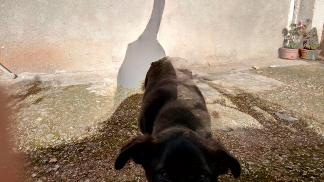 Animal Themes No People Indoors  Mammal Water Nature Day Eyeemcollection Eyeemphotography EyeEm Best Edits EyeEm Best Shots Love ♥ Dog Lover
