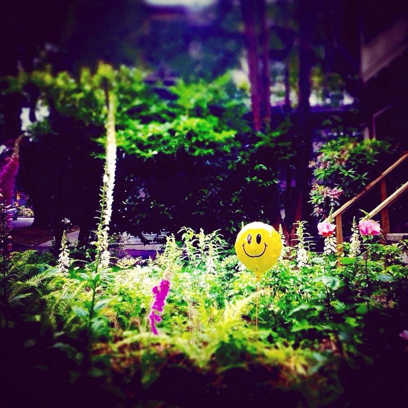 Incognito Rookie Jellybus Soullessphotography Phoneography Instagram EyeEm Vancouver Canada
