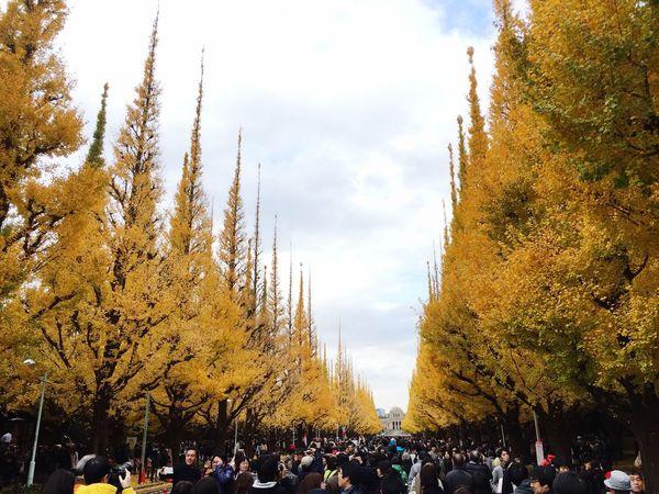 銀杏 銀杏並木 紅葉 神宮外苑 Ginkgo Ginkgo Tree Tree