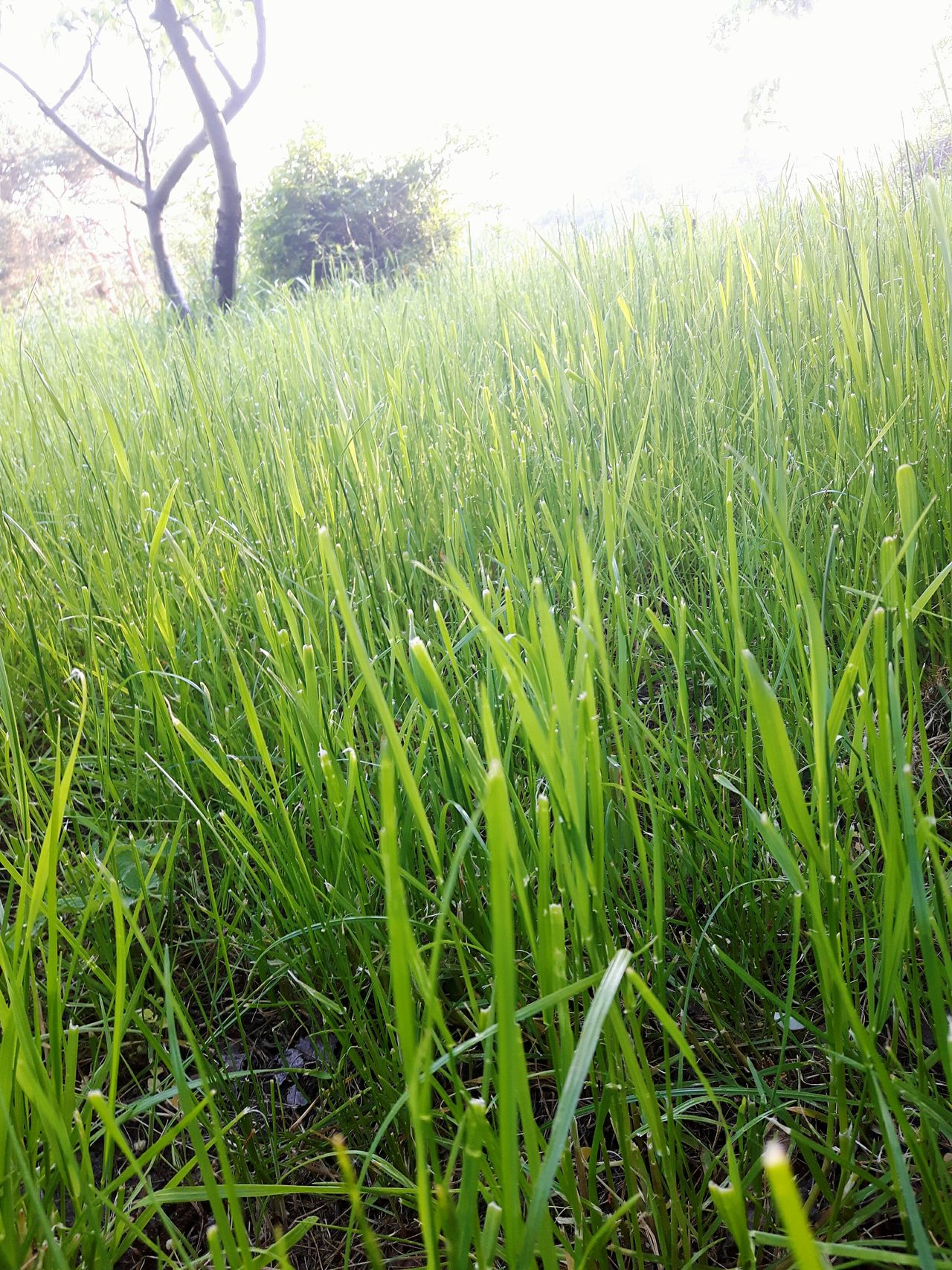 Grass POV Growth Field Nature Green Color Agriculture Grass Beauty In Nature Outdoors Close-up Freshness Rural Scene Grassfield Gardening Garden Trawa Ogrod