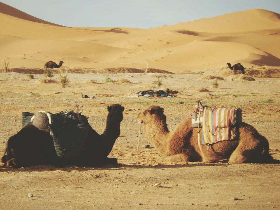 Merzouga Sahara Desert Trippin Morocco Merzouga