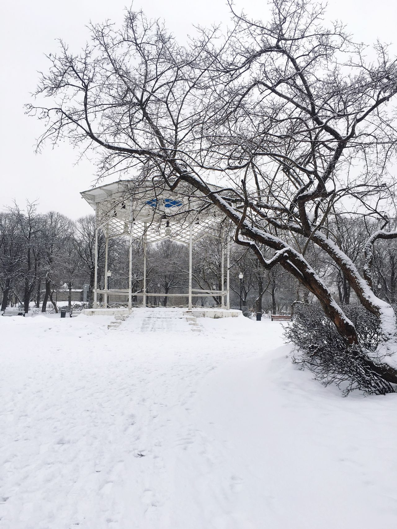 Snow Tree Winter Cold Temperature Bare Tree Weather Nature Branch Outdoors No People House Day Beauty In Nature Covering Tranquility Building Exterior Sky Architecture Park Gorky Park Russian Winter Moscow