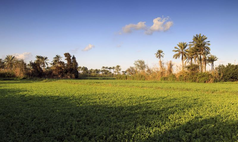 Egyptiqn farmers field Enjoying Life Farm Sunshine Treavelling Morning Landscape Nature Egypt Sunny Day Farmer Sunshine ☀ Green Green Fields Green Fields Green Leaves Green Nature Green Field