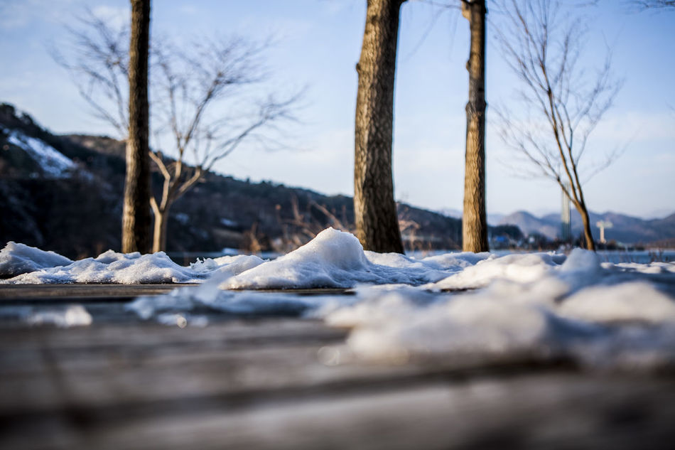 Beautiful stock photos of north korea, Bare Tree, Branch, Chuncheon, Cold