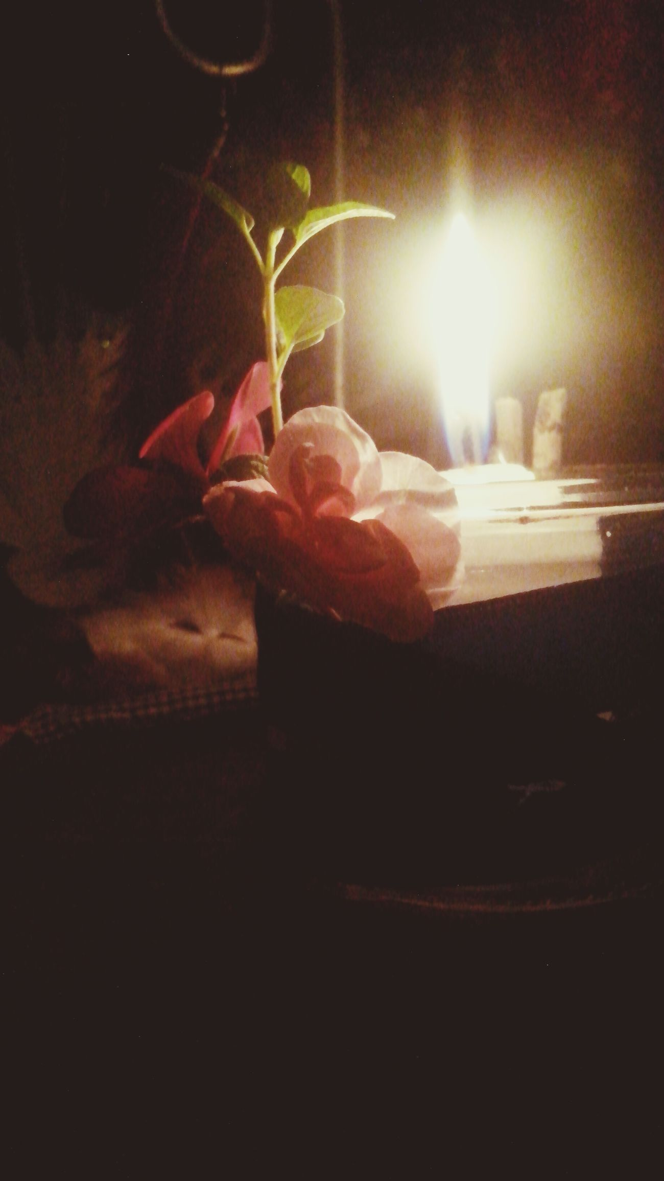 ¡Feliz Ostara! Eostre Dia Noche Little Wicca