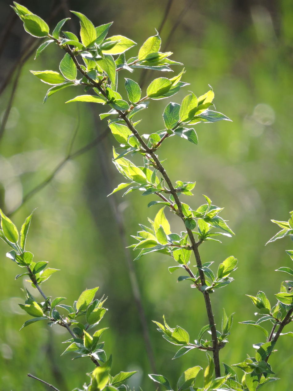 green on green Day Green Color Growth Leaf Nature No People Outdoors Plant Sunlit