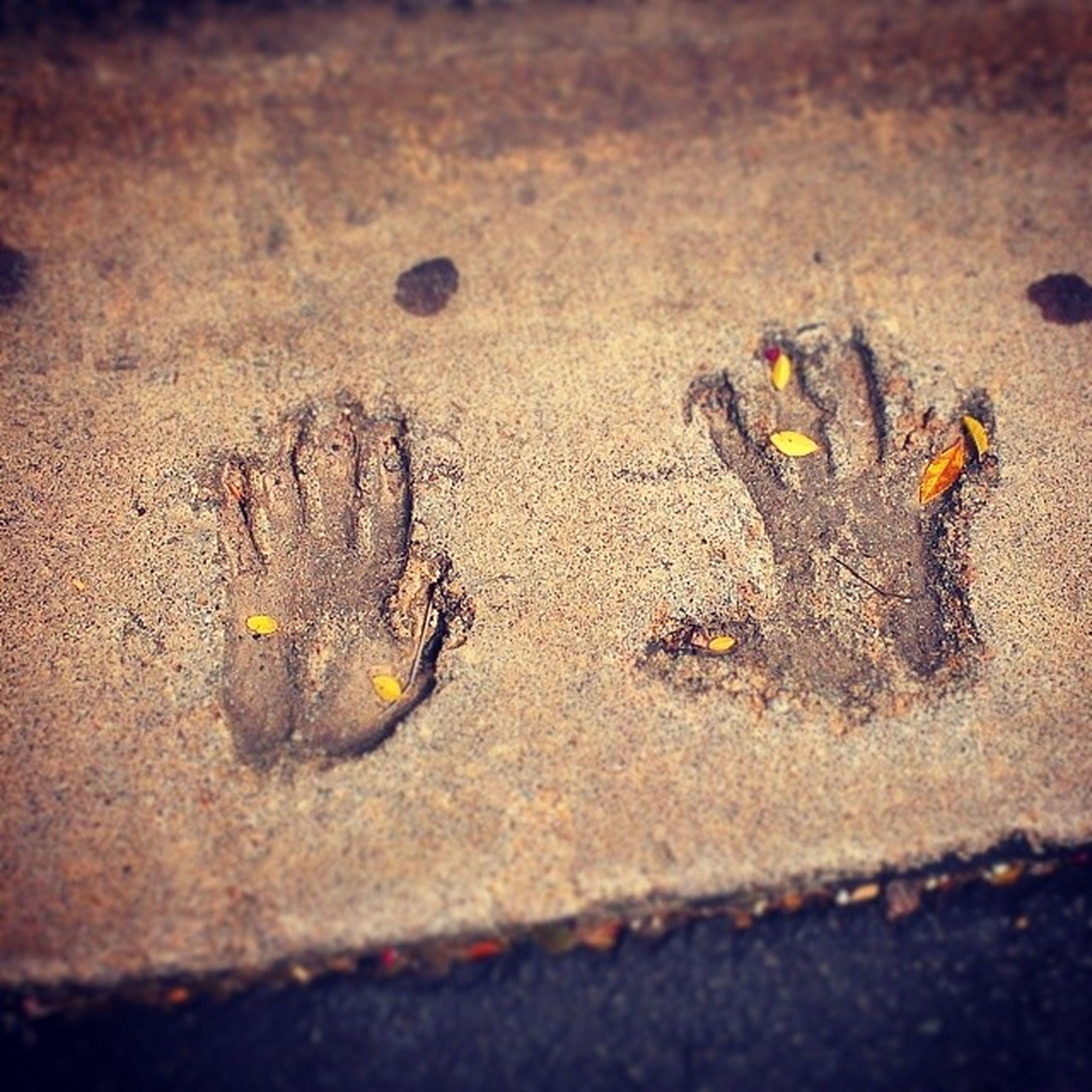 street, asphalt, close-up, high angle view, sand, road, selective focus, yellow, ground, no people, textured, day, outdoors, nature, beach, still life, death, vignette, sunlight, the end