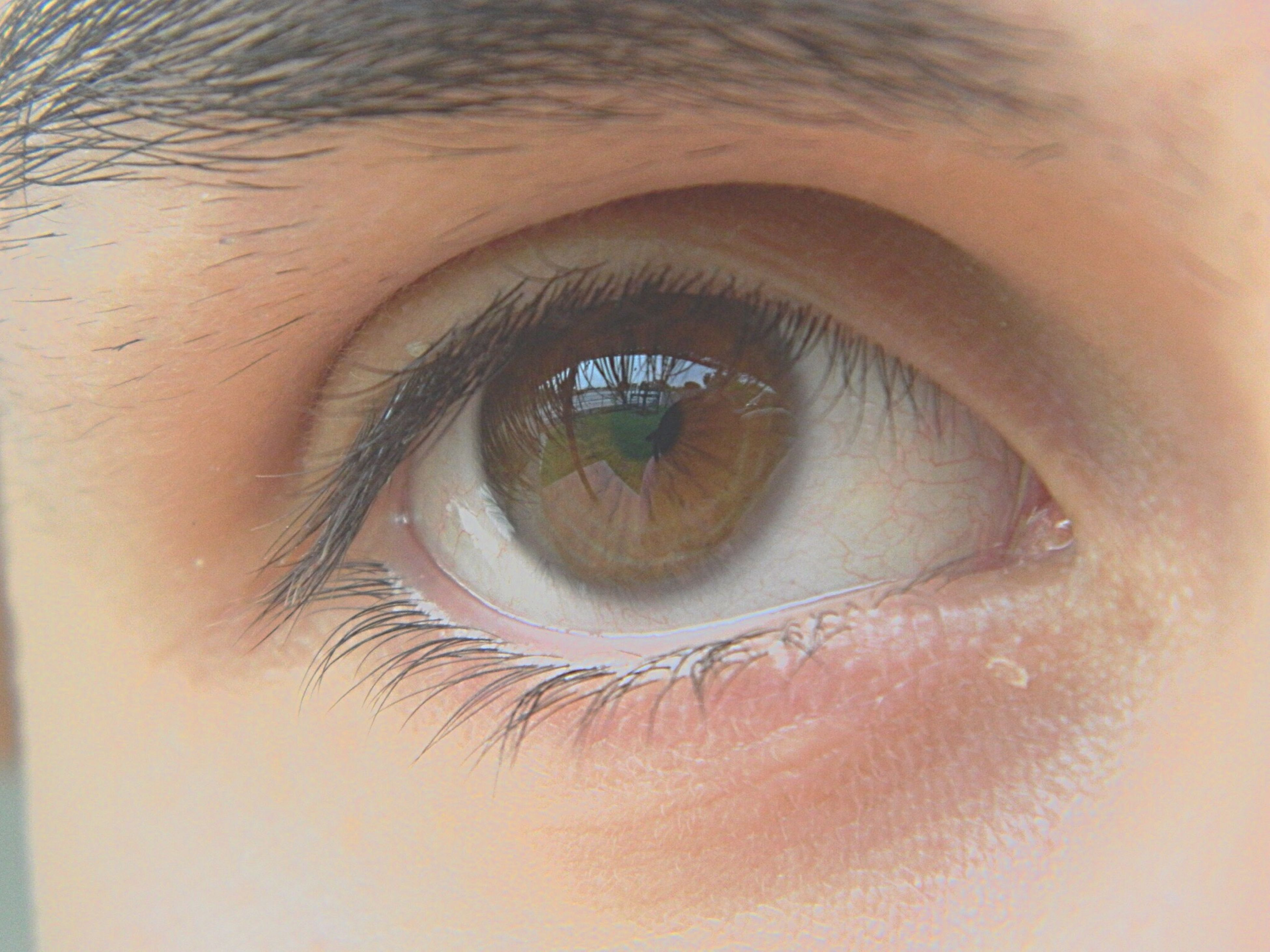 human eye, close-up, eyelash, eyesight, looking at camera, portrait, full frame, part of, sensory perception, reflection, indoors, human face, extreme close-up, circle, lifestyles, eyeball, digital composite