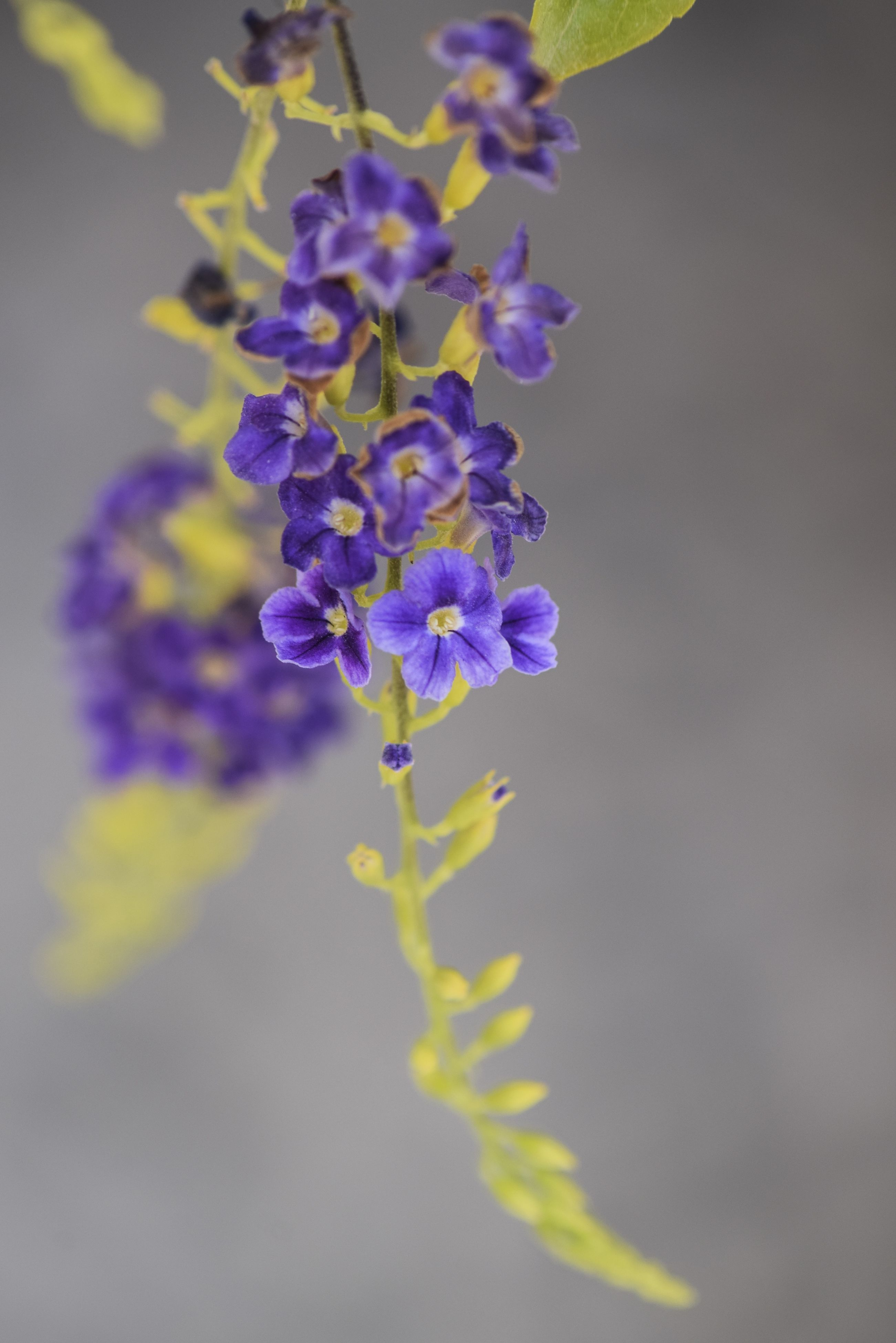 growth, nature, beauty in nature, purple, flower, plant, scented, fragility, no people, outdoors, freshness, close-up, day