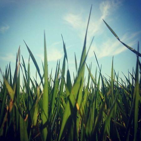 Coś w trawie piszczy 😀☁⛅🌲🌳🌞🍀🌿🍃 Spring Grass Meadow Heaven Clouds Sun Nature Blue Green Wagrowiecwyzwalaenergie Instaphoto Instaphotographer Instaday Instadaily Instagood EwaJoannaMatczyńskaPhotography