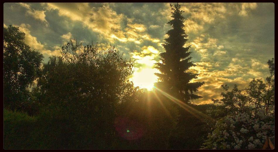 Sun Sunset Trees Sky
