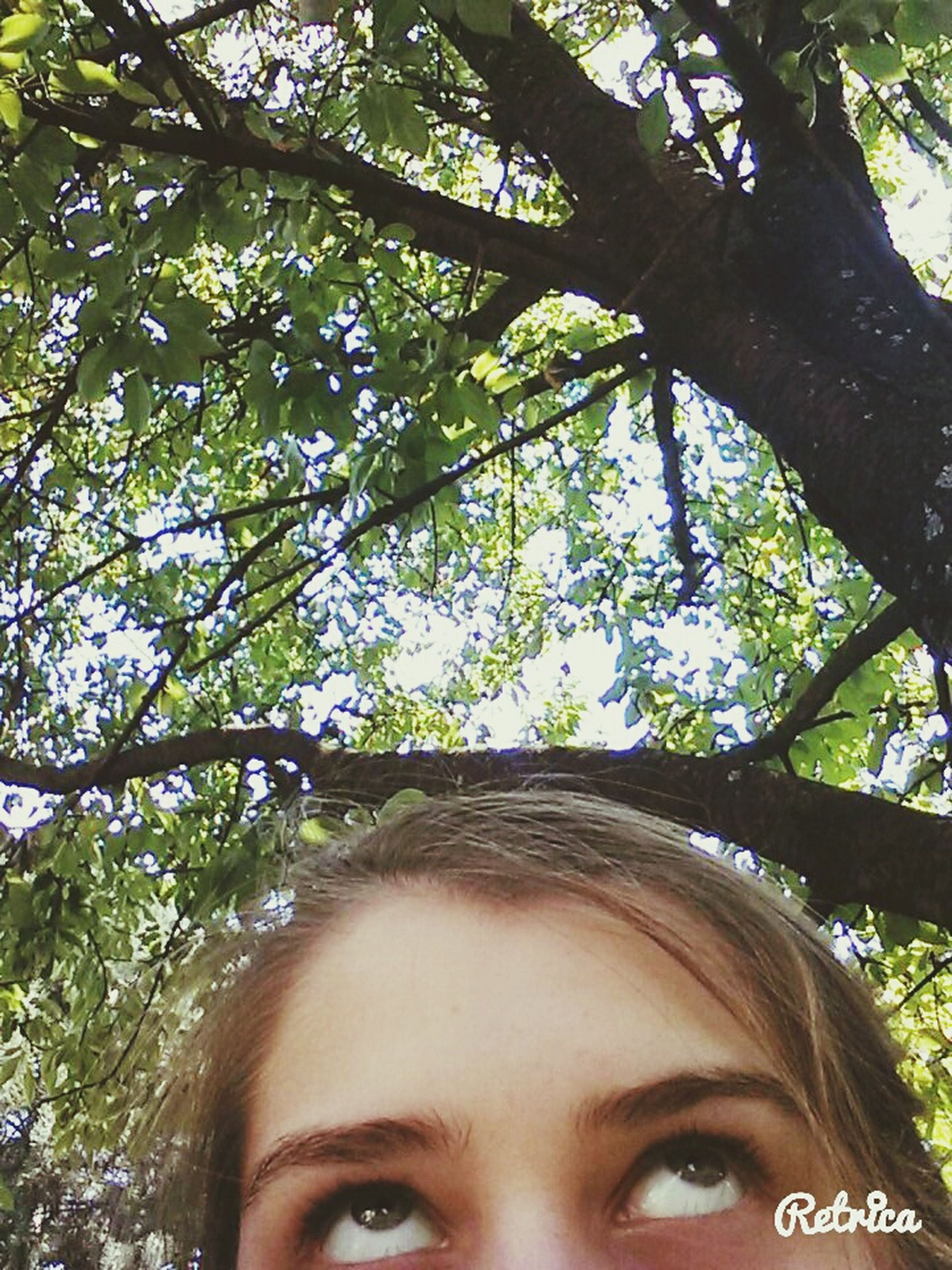 tree, headshot, young adult, lifestyles, person, low angle view, looking at camera, leisure activity, branch, portrait, front view, human face, close-up, young women, growth, day, head and shoulders, smiling