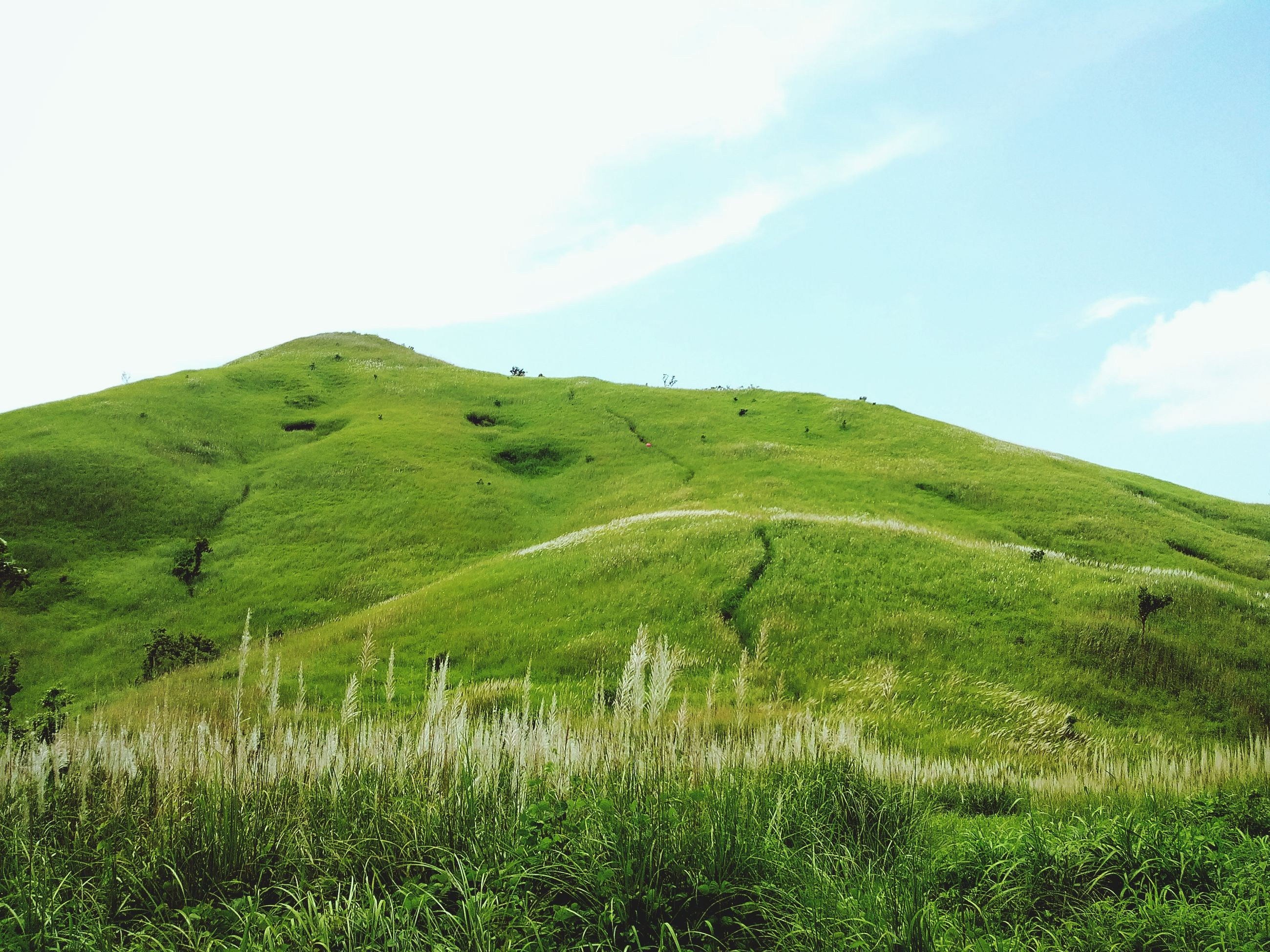 grass, landscape, tranquil scene, sky, tranquility, field, green color, scenics, grassy, beauty in nature, nature, growth, mountain, plant, non-urban scene, hill, green, remote, day, blue