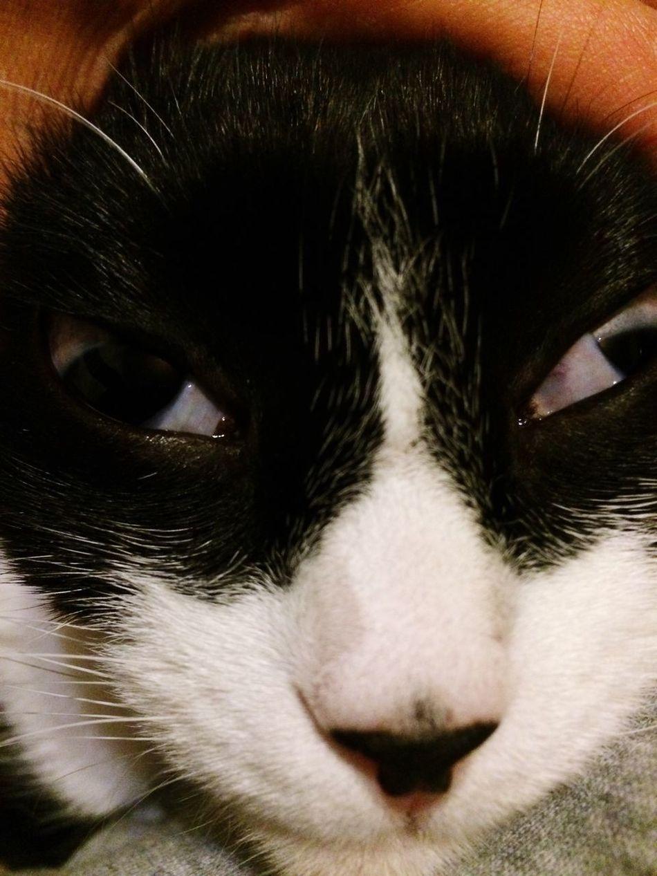 Neko Cute Pets Cute Cats Cat 猫 ヘン顔 貞子