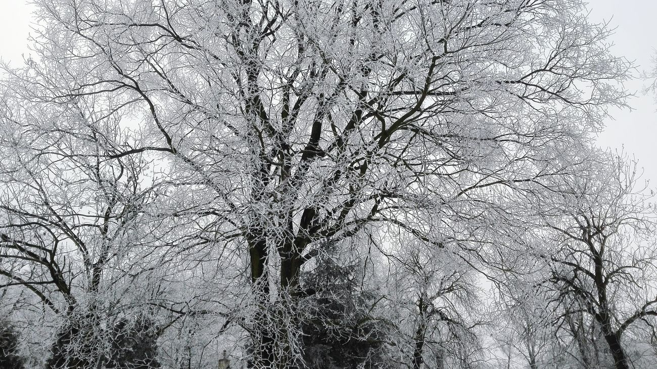 No People Tree Day Sky Nature Winter Cold Temperature Frosted Glass