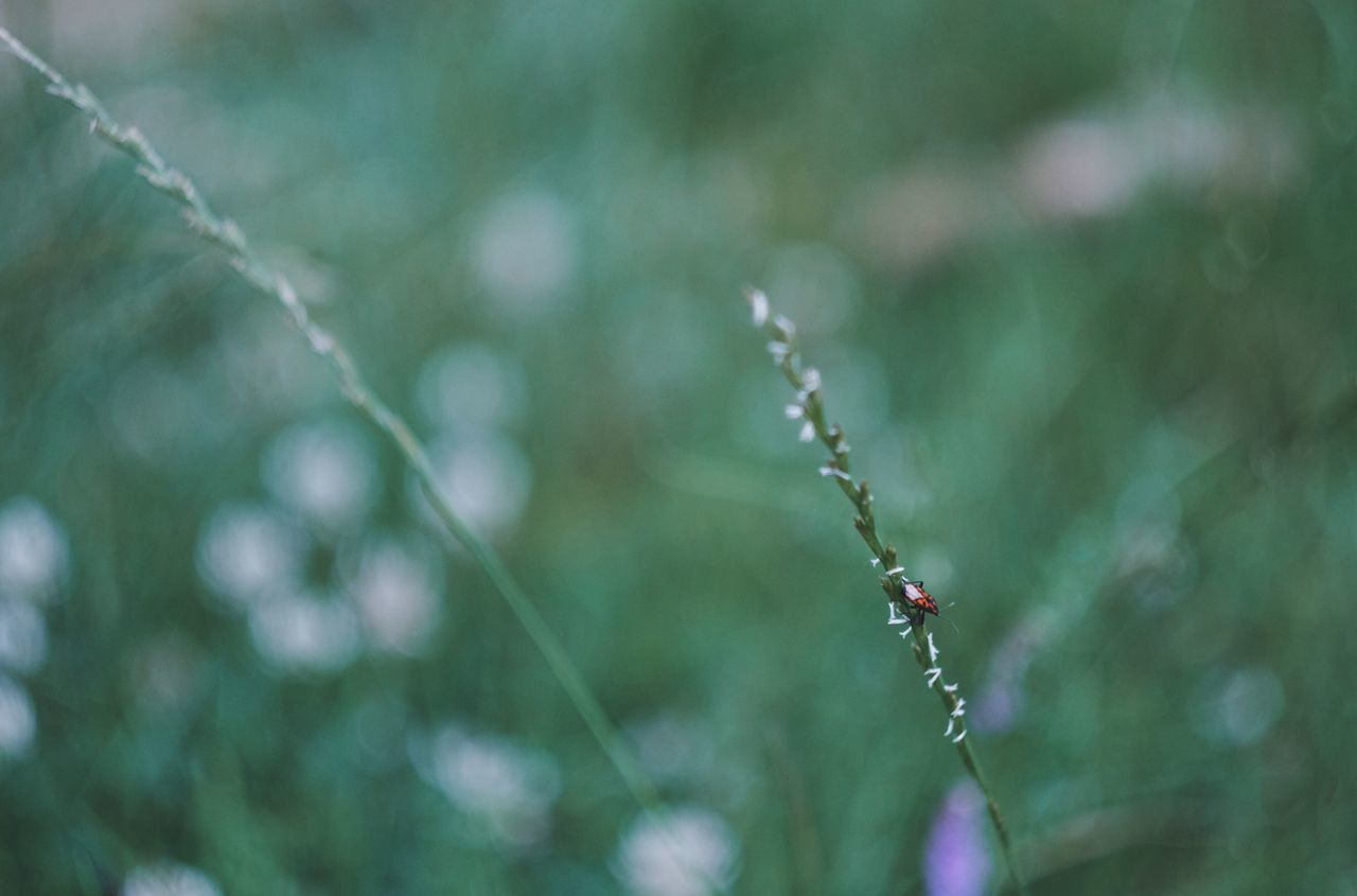 Nature Focus On Foreground Growth Day Outdoors Plant Beauty In Nature No People Close-up Freshness Water Fragility Fujifilm_xseries Grass Animals In The Wild Nature