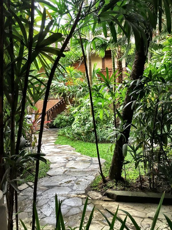 Verdant Bali Bali, Indonesia Lush Foliage Restful Place Tranquility Relaxing Refreshing Holiday Destination Travel And Tourism Vertical Nature Outdoors Colour Images Nobody
