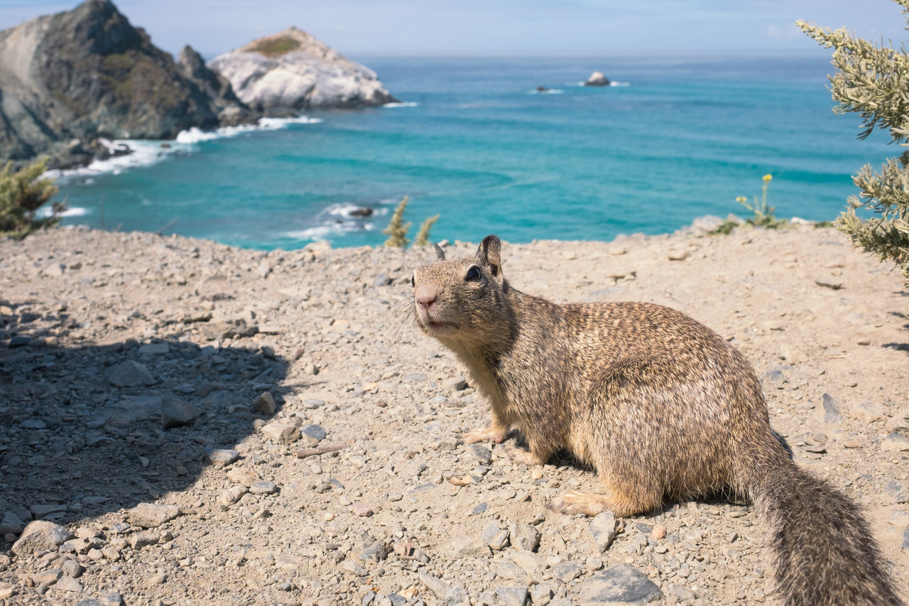 Yo, what´s up? // Animal Themes Animal Wildlife Animals In The Wild Aquamarine Beauty In Nature California California Coast Close-up Curiosity Day Fun Fur Looking At Camera Mammal Nature One Animal Outdoors Pacific Ocean Rock - Object Sea Showing Off Squirrel Squirrel Life Water