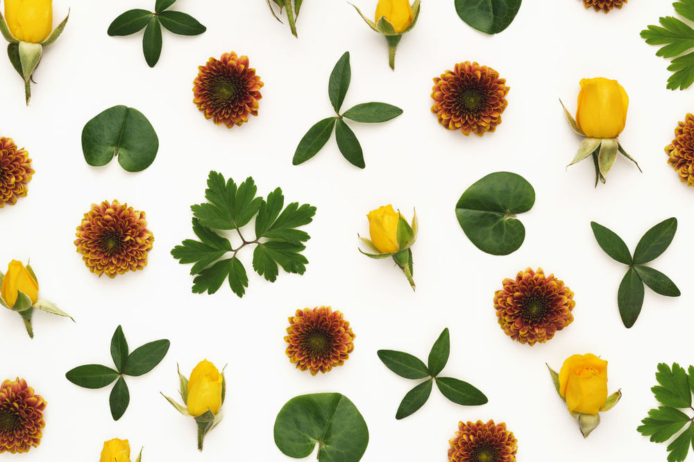 Yellow roses and green leaves arrangement on white background. Above Arrangement Backgrounds Beauty In Nature Close-up Composition Decoration Directly Above Floral Pattern Flower Flower Head Freshness Green Color Growth Leaf Leaves Multi Colored Nature No People Pattern Plant Summer Wallpaper White Background White Color