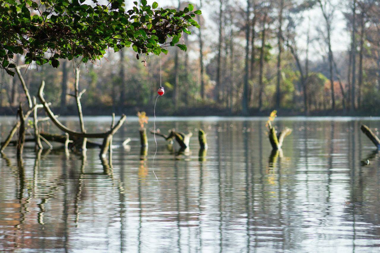 Just Hanging Around. Parks And Recreation Nature Landscape Fishing Bobbles Water Lakeside Landscape_photography Nature Photography Outdoor Photography Canon Sl1 Lake Lawson Lake Smith Nature Area Virginia Beach Relaxation Relfections Calm Peaceful Moment The Great Outdoors With Adobe The Great Outdoors - 2016 EyeEm Awards