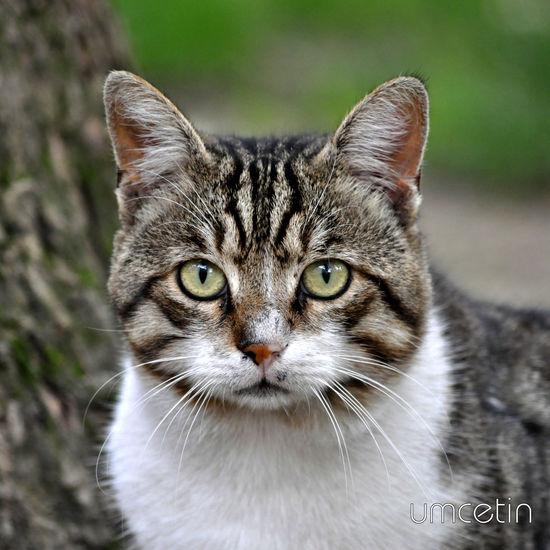 Cat Cat♡ Cat Photooftheday Bursa / Turkey Kedicik Bakış Animal Animals World