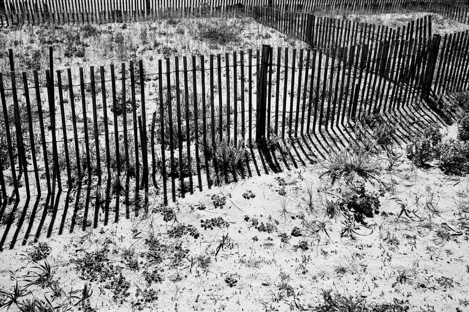at the beach Beach Blackandwhite Close-up Day Fine Art Photography Grass Monochrome Nature No People Outdoors Picket Fence Sand Shadow Sunlight Sunlight And Shadow Tree