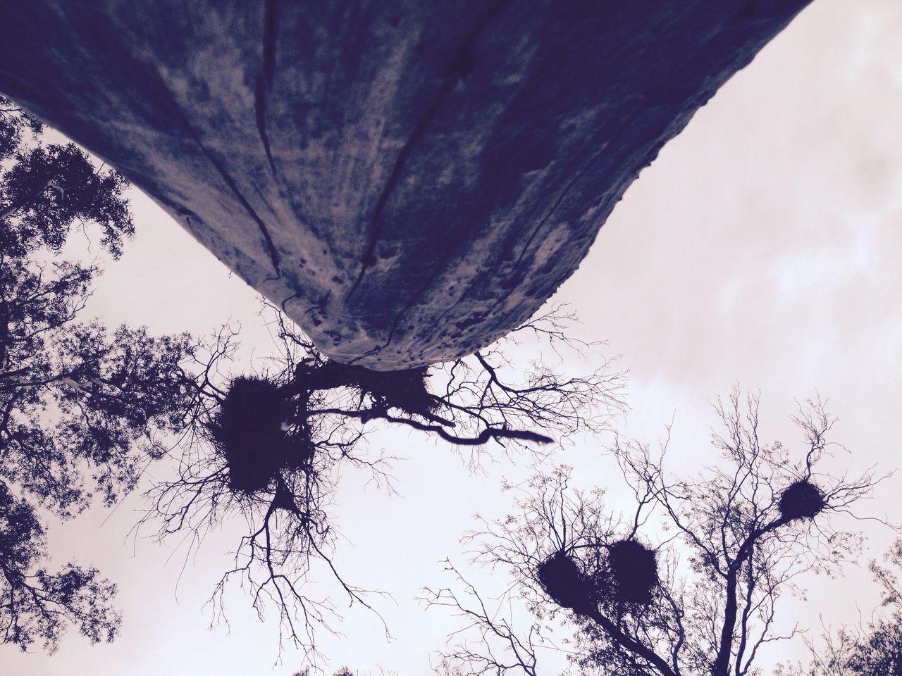 Low Angle View Tree Nature Parque Da Baronesa Saturday Pelotas