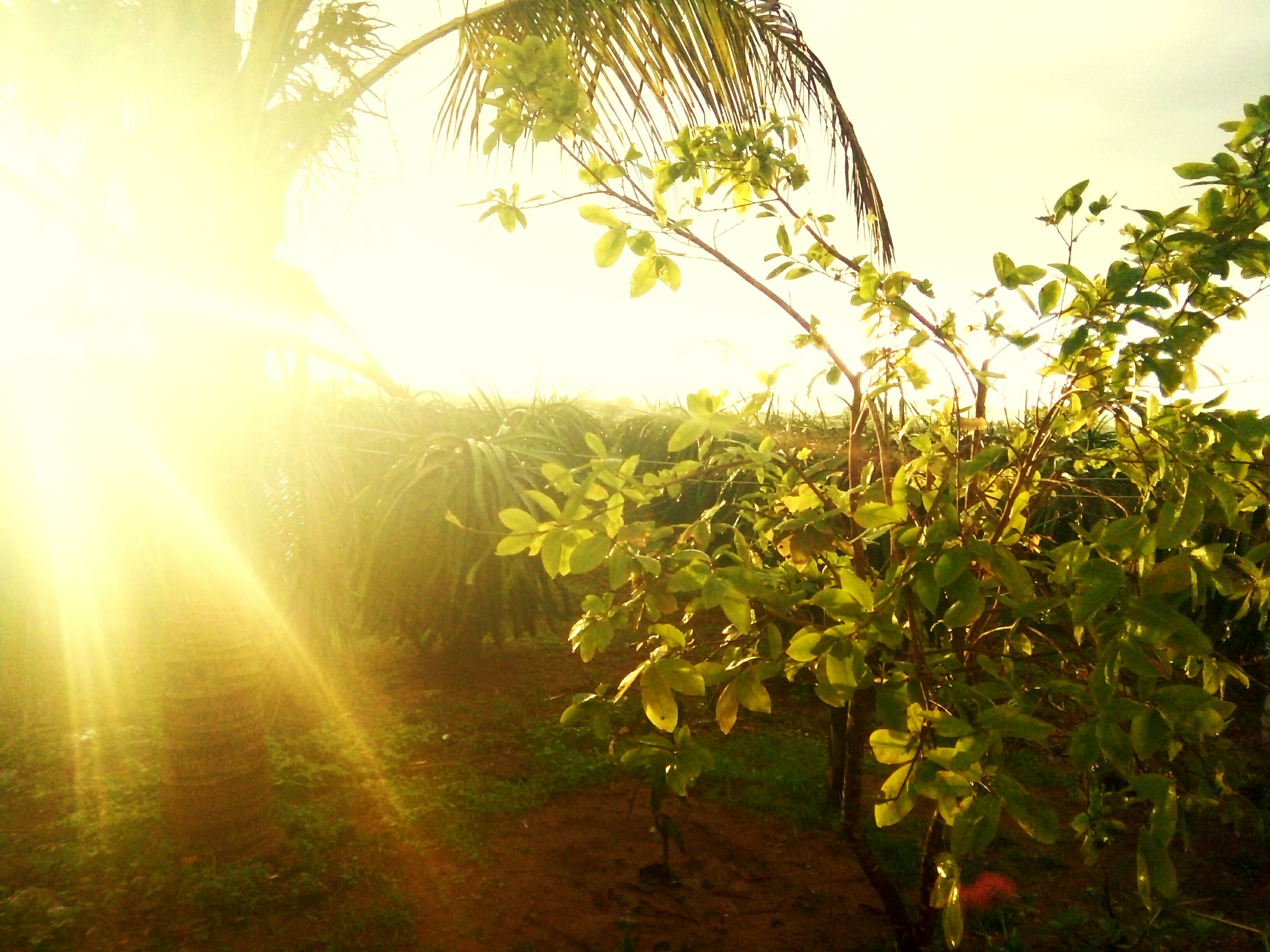 growth, nature, tree, no people, leaf, outdoors, day, sunlight, plant, beauty in nature, freshness