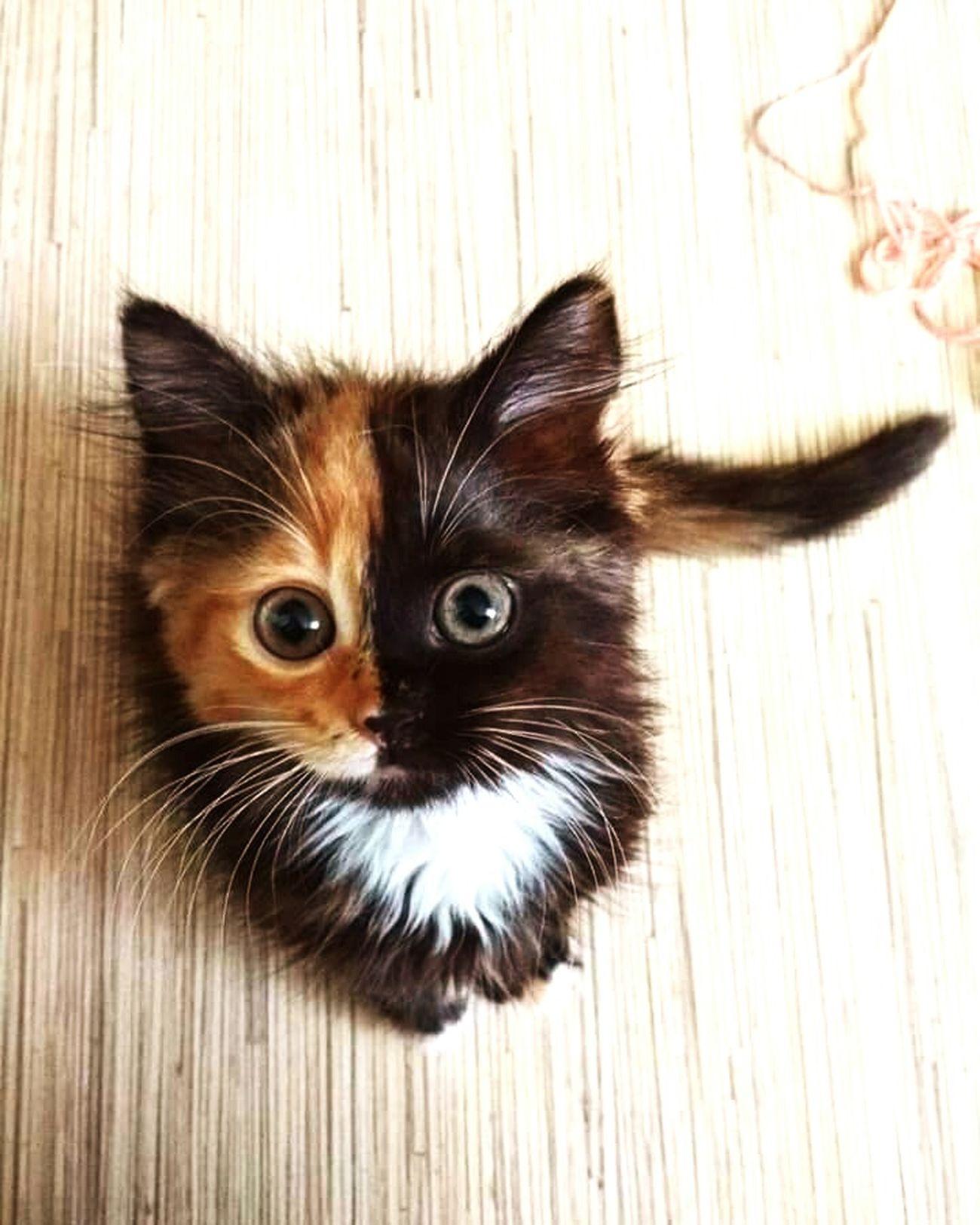 cute cat Domestic Cat Pets Indoors  Looking At Camera Catsagram Catlover Cat Photography Catportrait Catholic Cateyes Catsoftheworld