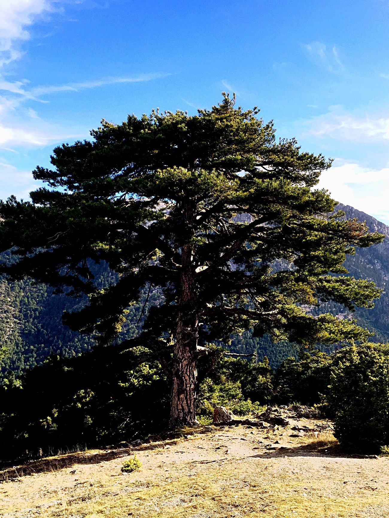 Hug A Tree No Ordinary Beauty Mountain View Walking Around AmazingGreece Mount Zireia