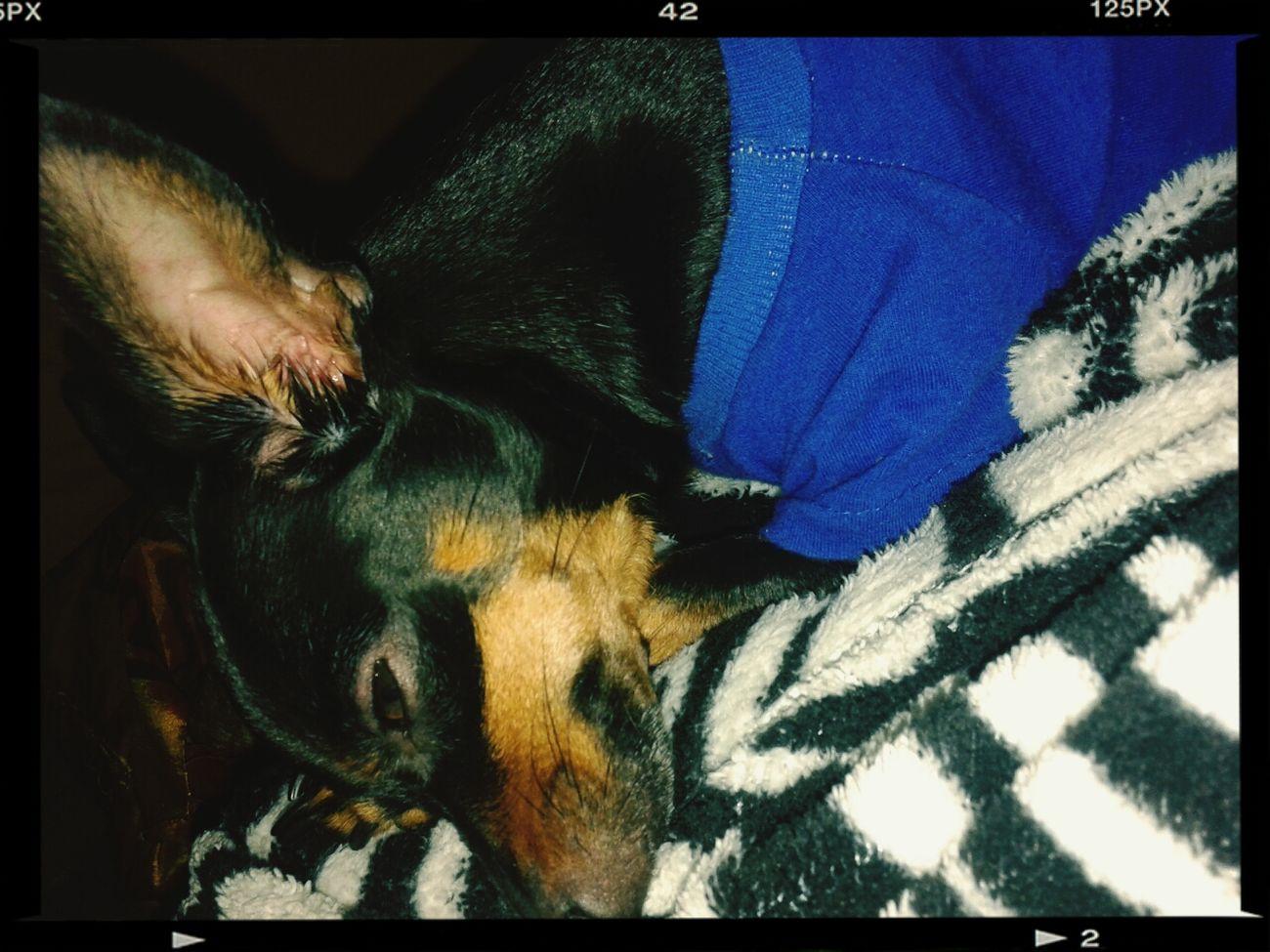 Dog SUSI <3 Pletaminha Hi!